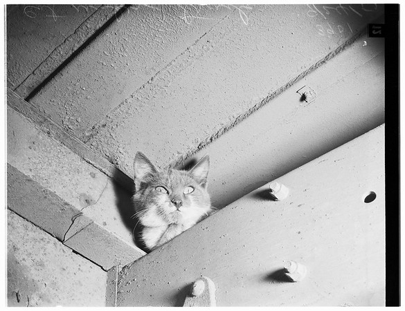 Cat trapped under truck, 1951
