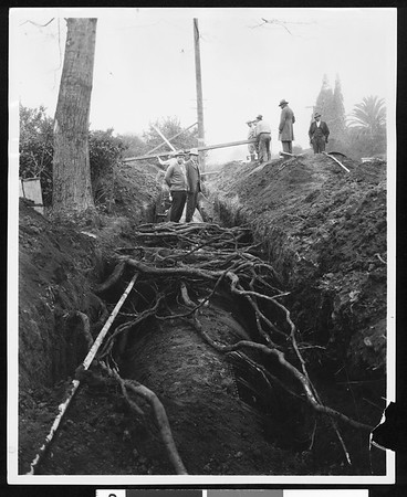Preservation of tree roots during installation of new underground pipeline, [s.d.]