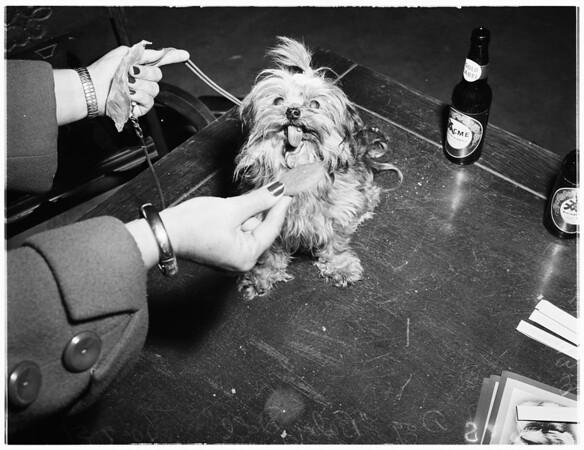 Mutt show at Burbank, 1951