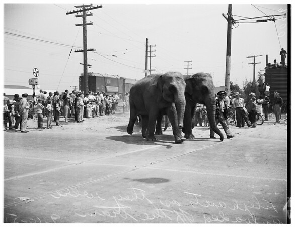 Circus (Ringling Brothers), 1951