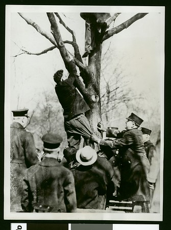 Communist Benjamin Saul being pulled from tree by police in Boston, 1931