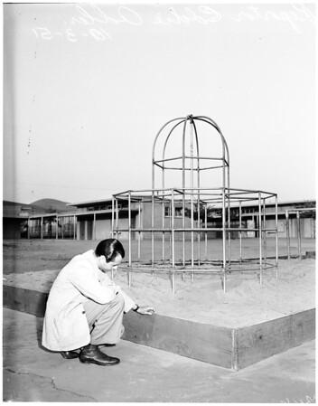 Blacktop fall, 1951.