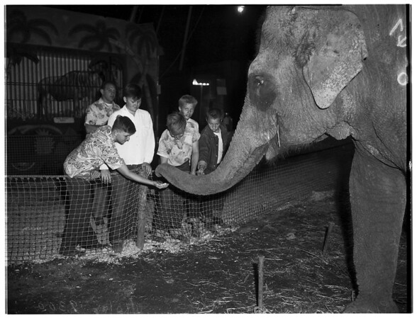 Ringling Brothers Barnum and Bailey Circus, 1951