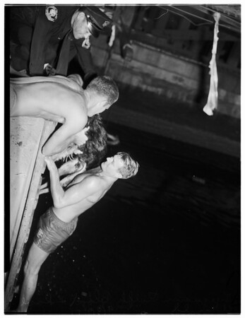 Lifeguards Rescue Dog from under Commodore Heim bridge, 1951