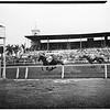 Del Mar Races, 1951