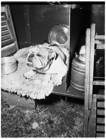 Dog Show, 1951
