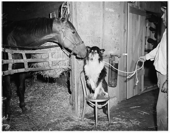 Del Mar horses camera day, 1951