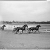 San Fernando fair races, 1951