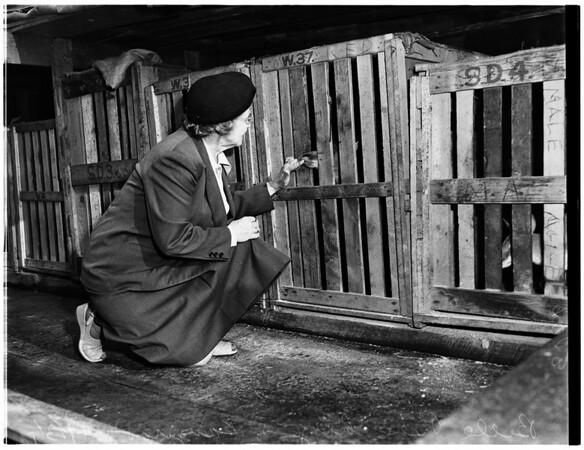 Animals...harbor, 1951