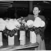 Flower show... Glendale... chrysanthemum show, 1951