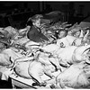 Sunshine mission turkeys, 1951