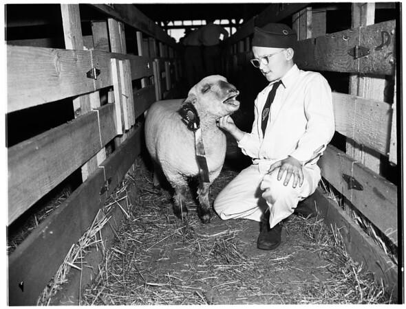 Stock Show, 1951