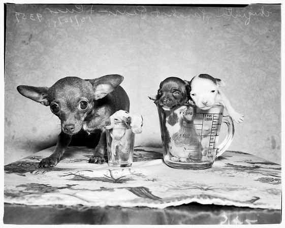 Dog feature, 1951
