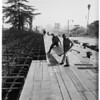 Tournament of Roses... Pasadena... workmen erecting first grandstand, 1951