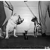 Glendale Kennel Club Show, 1951