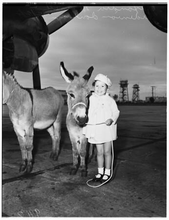 Imported donkeys, 1951