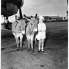 Imported donkeys, 1951