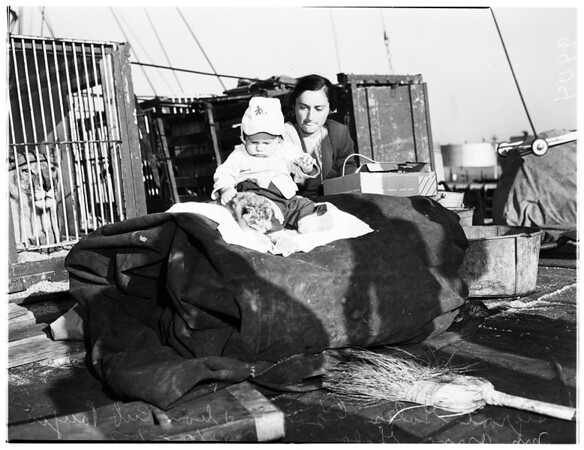 Baby Lion Cub Born at Sea, 1951