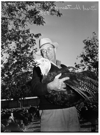 Thanksgiving pictures... Fred Huntsinger Turkey Farm... Northridge, California, 1951
