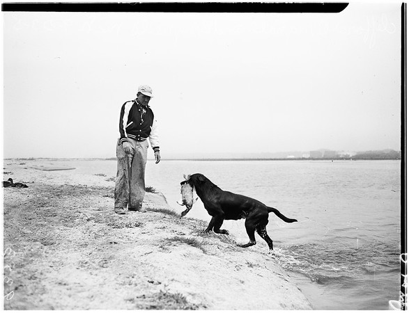 Southern California Retriever Club Incorporated, 1951