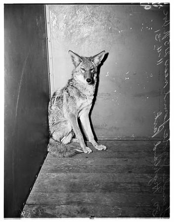 Ann Street Shelter, 1951