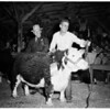 Great Western livestock show, 1951
