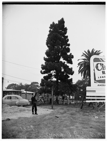 tree was decorated by members of Local 11, Brotherhood of Electrical Workers, American Federation of Labor, 1951