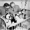 Dolls to orthopedic hospital children, 1951
