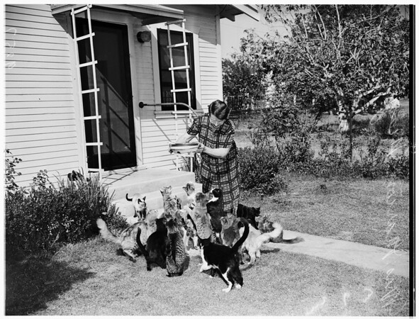 Has to move...has too many cats, 1951
