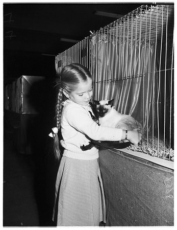 Sixth annual all breed cat show at Long Beach auditorium , 1951