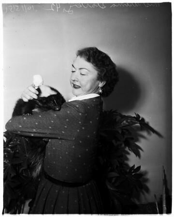 Skunk rescued from traffic (Pasadena), 1951