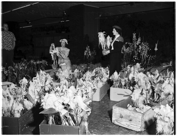 Flower show (International), 1952