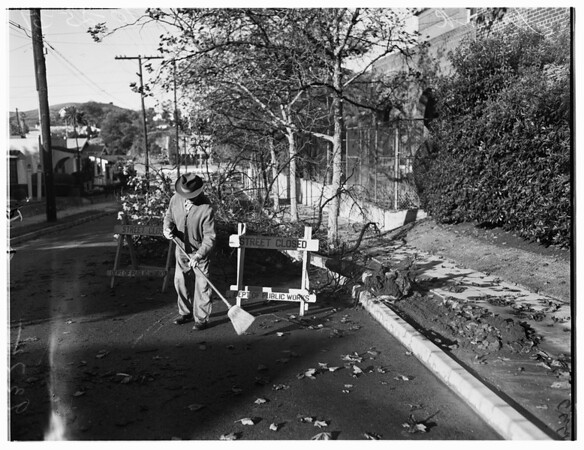 Weather picture...tree down, 1951