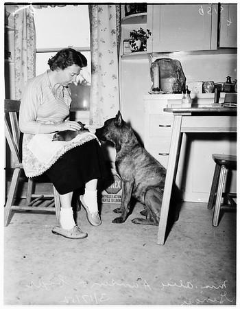 Rare Boxer litter, 1952