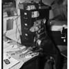 Sleuth Dog, 1951