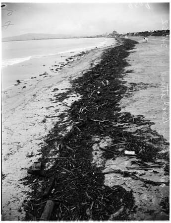Flood at Los Alamitos -- Long Beach, 1952