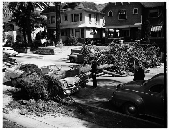 Tree down on auto ...827 South Burlington Avenue, 1952
