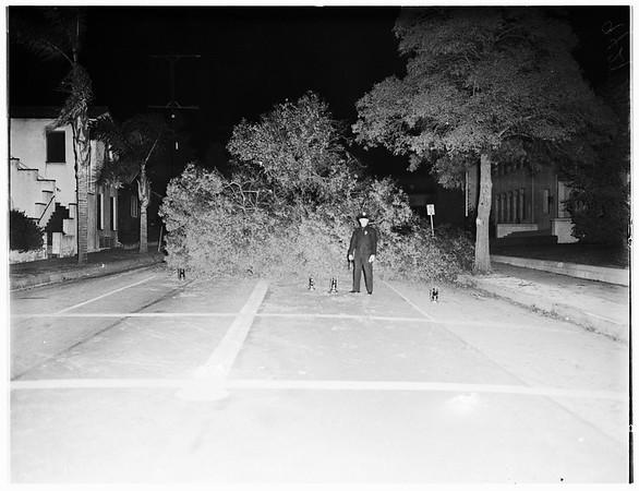 Tree down in street, 1951