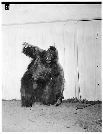 Ape man with collection of ape and sloth heads, and dressed as an ape in costume he wears for bit parts in movies...regular job is bartending in Ciro's, 1951