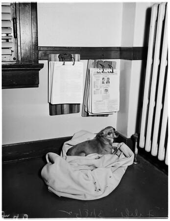 Dog mutilation, 1952