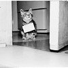 Cat who wishes to be adopted, with placard around neck ...at home of Mrs. John Saba, 4934 West 133rd Street, Hawthorne, 1952