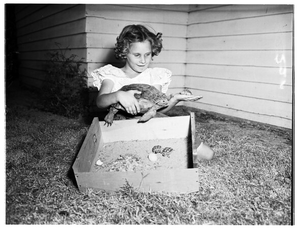 Turtle Story, 1951