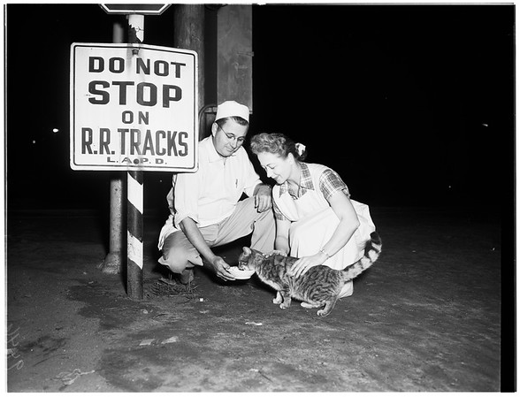 Cat waits for streetcars, 1952