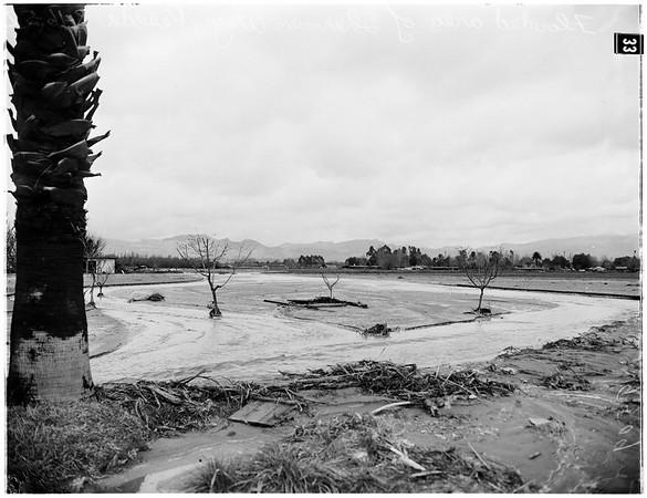 Storm aftermath ...Reseda, 1952