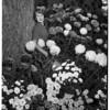 Flower Show, 1951