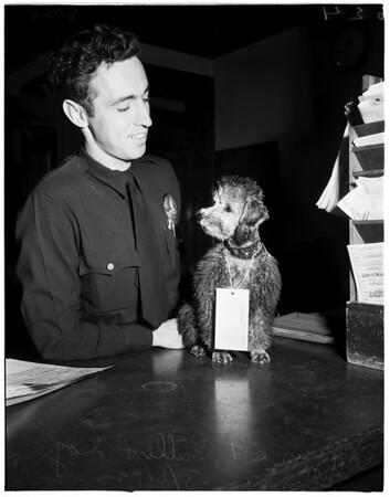 Dog belonging to narcotics suspect at West Los Angeles desk for safekeeping, 1952
