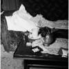 Little girl murdered (Lakewood), 1951