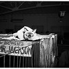 Cat Show (Western Cat Club) Hollywood Park, 1951