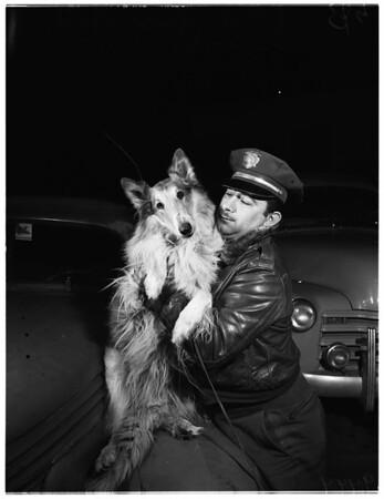 Lost dog on Cahuenga Freeway, 1952
