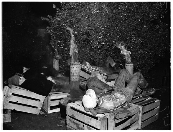 Smudging in Citrus Belt Area, 1952